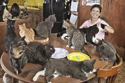 หญิงใจบุญเลี้ยงแมว700 ตัว เผย30ปีเลี้ยงมา2หมื่นตัว