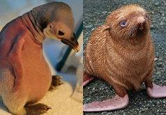 เพนกวินไร้ขน แมวน้ำขนปุย กับชีวิตที่เดียวดาย