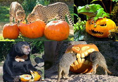 สัตว์โลกฉลองวันฮาโลวีน 2011