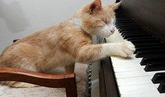 ทึ่ง! แมวเหมียวตาบอดเล่นเปียโนได้