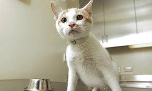 ปาฏิหารย์! แมวอดข้าวอดน้ำ21วันไม่ตาย