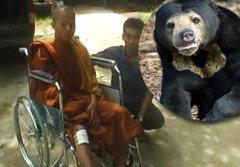 หมีตะปบเณร หมาวัดขย้ำสู้ รอดตายหวุดหวิด