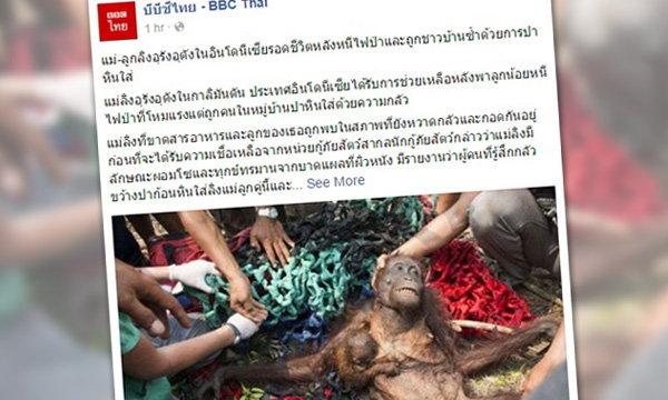 ภาพสลด ลิงอุรังอุตังแม่ลูก หนีไฟป่าอินโด มาถูกคนทารุณ
