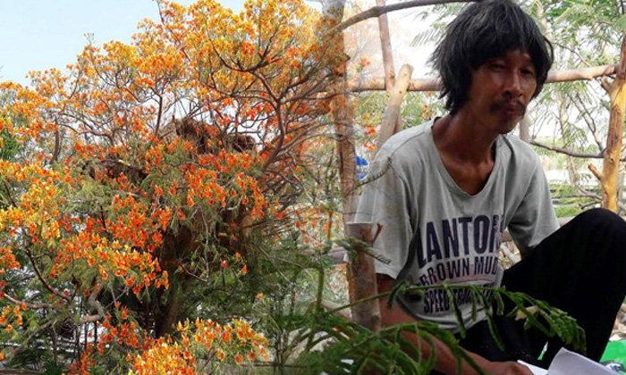 ชายวัย 47 ปี ชาวลพบุรี สร้างบ้านบนต้นไม้หลังถูกไล่ที่