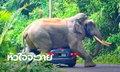 """คลิประทึก """"พี่ดื้อ"""" ช้างป่าเขาใหญ่ ขย่มรถนักท่องเที่ยวจนหลังคายุบ"""