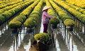 """รอดทุกต้น...เกษตรกรเวียดนาม """"ยกสวน"""" หนีน้ำท่วม"""