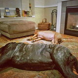 ลูกหมาตัวใหญ่ที่สุดในโลก