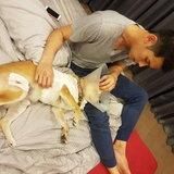 กันต์ กันตถาวร กับสุนัขที่บ้าน