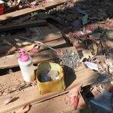 บุกโรงงานเถื่อนลอบแปรรูปไม้-พบไม้ประดู่กว่า 50 แผ่นเพิ่งถูกเลื่อยใกล้รีสอร์ท