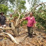 ช้างป่าอาละวาด ฝากรอยเท้า-ทำลายพืชผลของเกษตรกรพินาศนับ 100 ต้น