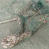 230961-ศรีสะเกษ ชาวบ้านผงะ ใส่ลอบดักปลากลับได้งูเหลือมยักษ์กลับมาแทน