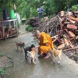 พระเลี้ยงหมาหนุนพรบสัตว์เชื่อคนจะไม่ทิ้งหมา