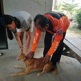 โคราช-วินาทีเจ้าหน้าที่กู้ภัยเร่งช่วยชีวิตสุนัข หลังถูกคนใจร้ายใช้ปืนลูกดอกยิงคอบาดเจ็บสาหัส