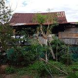 บ้านยายคำม่อน ที่อยู่มาตั้งแต่เกิด อายุบ้านกว่า 100 ปี
