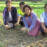 Fwd: พะเยา อากาศแปรปรวนทำหอมแดงเกษตรกรเน่าเสียหายกว่า 1,000 ไร่
