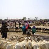 ตลาดค้าปศุสัตว์ในโซมาลีแลนด์