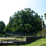 8.Chestnut Tree of One Hundred Horses