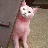 พิงค์ แพนเตอร์ (Pink Panther)