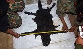 พิสูจน์แล้ว 'เสือดำ' ถูกยิง 5 นัด กระสุนเจาะหัวและลำตัว