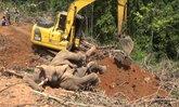 """ร้อนจนล้ม """"พลายรำภา"""" ช้างราคา 2 ล้าน เป็นลมช็อกตายต่อหน้าเจ้าของ"""