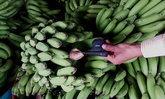 เจอแล้ว กล้วยติด GPS ถูกลักตัด พบสัญญาณโผล่ตลาดผลไม้ปากแซง