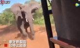 สุดระทึก ช้างป่าโมโหหนัก วิ่งไล่ชนรถซาฟารีจนงาหัก