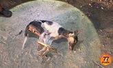 สุนัขจรจัดกัดเด็ก 3 คนรวด พฤติกรรมคล้ายหมาบ้า ชาวบ้านไล่ทุบตายคาที่