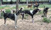 """เมืองคอนแจงดราม่า """"วางยาสุนัข"""" ย้ำปฏิบัติตามหลัก วอนทุกฝ่ายเข้าใจ"""