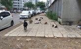ประกาศ! กทม.-นนทบุรี และอีกหลายจังหวัด เป็นพื้นที่พิษสุนัขบ้าระบาดชั่วคราว 30 วัน