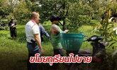 """""""ไม่ปลูก แต่ขโมยไปขาย"""" ตำรวจรวบคนร้ายขับ จยย. ตระเวนลักทุเรียนในสวน"""