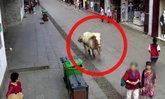 ม้าขาวตกใจ วิ่งเตลิดชนคนเดินถนนในจีน เจ็บ 3 ตำรวจจำใจยิงดับ