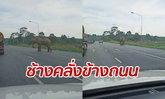 รถเบรกเอี๊ยด! ช้างตกมันคลั่ง เดินเตลิดถนนซูเปอร์ไฮเวย์ สุราษฎร์ธานี
