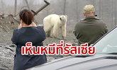 หมีขั้วโลกหิวโซ เดินไร้แรง 1,500 กิโลเมตร เข้าเมืองรัสเซียหาอาหาร ครั้งแรกรอบ 42 ปี