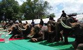 """ช้าง 12 เชือกหมอบกราบ ส่งดวงวิญญาณ """"ตามิว"""" หมอสะดำรุ่นสุดท้าย"""
