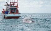 วาฬบรูด้าลอยตายอืดไม่ทราบสาเหตุ คาดเป็นยักษ์ใหญ่ใจดีแห่งทะเลชุมพร