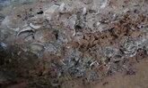 คนสตูลฮือฮา พบซากดึกดำบรรพ์อายุ 550 ล้านปี โผล่ในถ้ำพระนอน