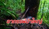 พบศพหนุ่มหายตัวไปตั้งแต่ 7 ต.ค. สภาพเหมือนหนีอะไรจนตกต้นไม้ตายกลางป่าลึก
