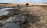 ซิมบับเวเผชิญสภาวะภัยแล้ง ช้างป่าขาดแคลนน้ำ-อาหาร ล้มตายแล้ว 200 ตัว