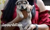 ฮือฮา น้องมีบุญ หมา 20 นิ้ว รอดตัวเดียวในคอก เจ้าของได้โชค 2 ตัวตรงๆ ตั้งแต่เกิด