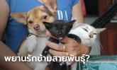ฮือฮาทั้งหมู่บ้าน หมารักแมว ได้ลูกข้ามสปีชีส์ 4 ตัว หมอตัดบทยันเป็นลูกแมว