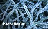น้ำค้างแข็ง มาแล้ว! ดอยอินทนนท์อุณหภูมิวูบ เหลือ 4 องศาเซลเซียส