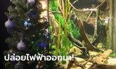 น้องปลาไหลไฟฟ้า ไม่ตกงาน! สวนสัตว์น้ำสหรัฐต่อสายลงตู้ เปิดไฟต้นคริสต์มาส