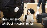 """จีนสุดเจ๋ง ฝึก """"หมาจรจัด"""" ทำงานให้ศุลกากร พร้อมบรรจุตำแหน่งงานทันที"""