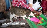"""คอหวยตาโต """"เจ้าโชคดี"""" แมวแสนรู้กระโดดขึ้นเจ้าแม่ตะเคียน เสี่ยงเซียมซีเลขนำโชค"""
