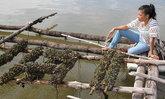 """ตายเป็นเบือ! ฝนตกหนัก ทะเลหายเค็ม """"หอยแมลงภู่ตาย"""" เสียหายนับล้าน"""