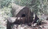จนท.บุกจับเศษเสี้ยวกองทัพมด-ลอบตัดไม้พะยูงกลางป่าชายแดนส่งออกเพื่อนบ้าน