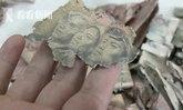 ปู่จีนสุดช้ำ ปลูกผักขายเก็บเงินมา 10 ปี โดนหนูกัดขาดหมด