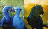 เหลือแค่ในการ์ตูน? นักวิจัยเชื่อ Blue Macaw อาจสูญพันธุ์ไปแล้ว