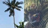 หนุ่มใหญ่ตายคายอดมะพร้าวสูง 20 เมตร ชาวบ้านเห็นนึกว่าหลับ เรียกปลุกไม่ตื่น