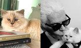 """อยากเกิดเป็นแมว! """"ชูแปตต์"""" มีลุ้นรับเละมรดก """"คาร์ล ลาเกอร์เฟลด์"""" 6,000 ล้าน"""